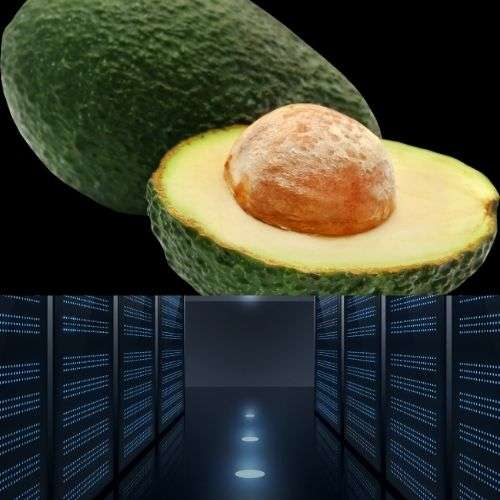 While Selecting Best Web Hosting Company For Your Avocado Fruit Blog